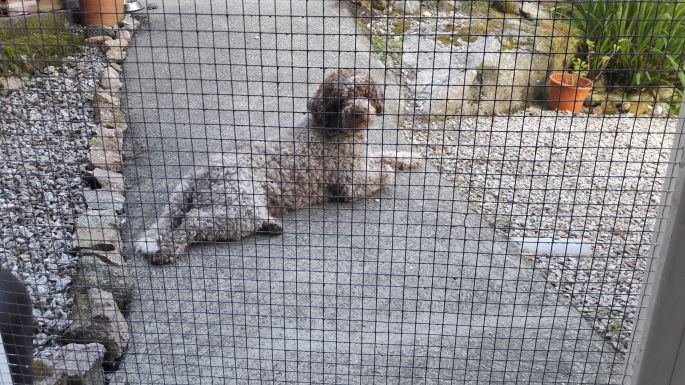 El Camino, Muxia, Péter kutyája