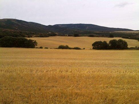 El Camino tajkep gabona mezovel.jpg