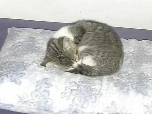 ...még jobban összegömbölyödik és alszik tovább a kis lustaság. Azért ez mégiscsak szemtelenség, hogy meg sem ijed tőlünk, de még a vakutól sem! :-)