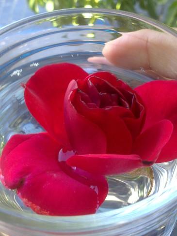 A mai napi mottónk vizuális lenyomata: a rózsa, mint a boldogság szimbóluma épp egy pohár vízben áztatja alsó végtagját. A mondat majd a poszt végén nyer értelmet.... :-)