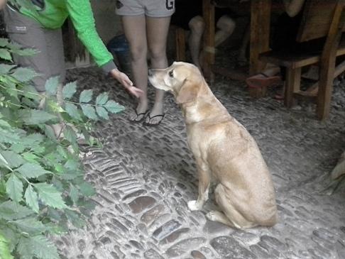 Ez a jámbor kutyus is nálunk szállt meg zarándok gazdijával együtt.