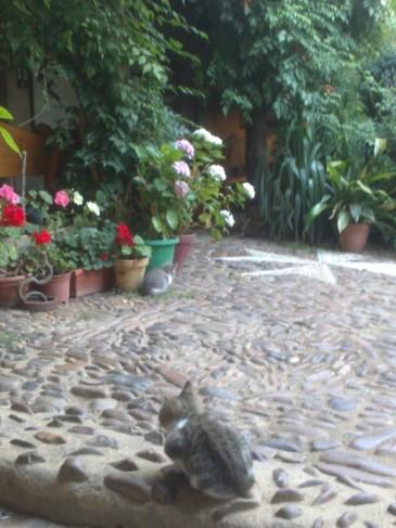 Virág csendélet zöld bokorral és két cicával.