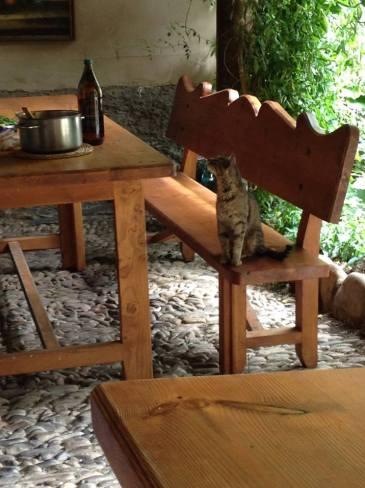 Zarándok vacsora készül (vagy már vége?). A cica innen sem hiányozhat. :-) Innen főleg nem!
