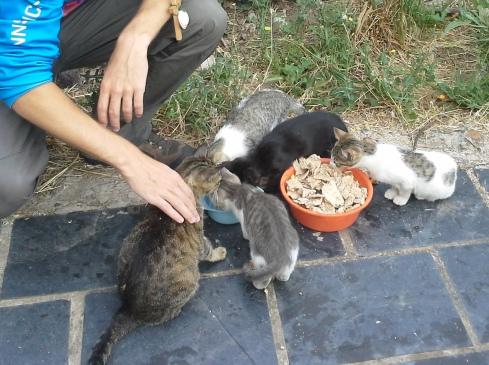 Kristóf és a cica család. Itt már nagyon jóban vannak! :-)