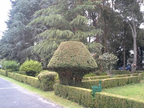 Gombára nyírt sövények a külső kertben.