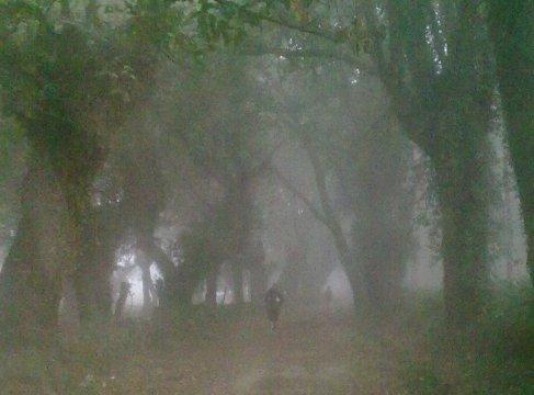 El Camino Galicia kodos erdo.jpg