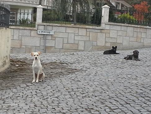 A falu kutyái érdeklődve figyeltek, de lusták voltak megmozdulni.