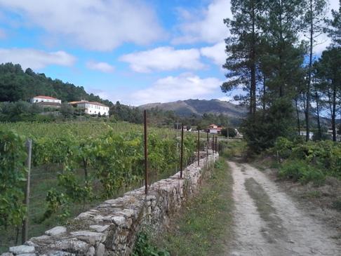 Kellemes útszakasz a portugál caminón.