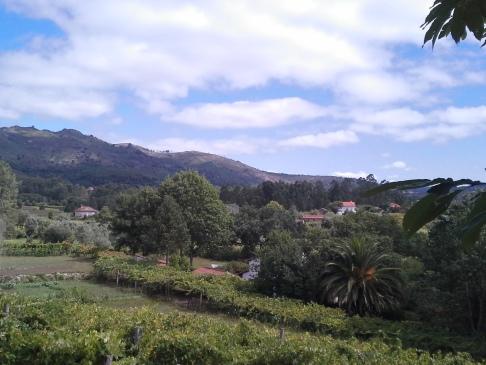 Portugál út - dombok, völgyek, pálmafák.