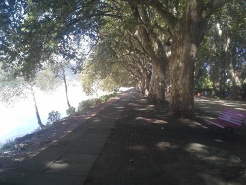 Árnyas platánfa sor a Lima folyó partján.