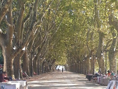 Platánfa sor Ponte de Lima előtt.