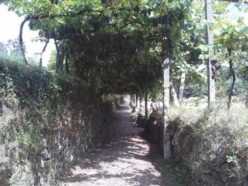 Itt épp egy szőlőlugas alatt vezetett az út.