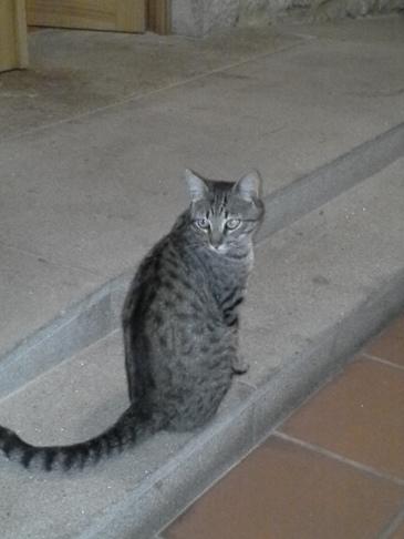 A cica, aki nem akarta elhagyni az alberguét.