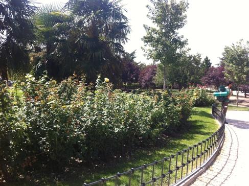 Madrid, a bazilika mögötti park