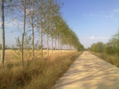 El Camino fasor.jpg