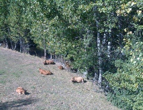 El Camino tehenek.jpg