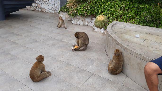 Andalúz körút, Gibraltár, szikla, majom