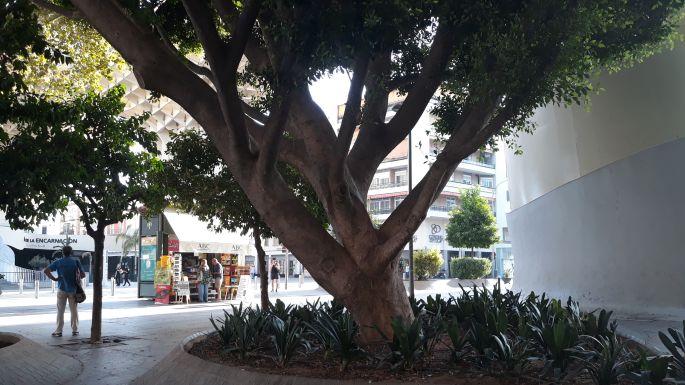 4_andaluzia_sevilla.jpg