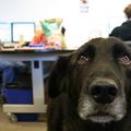 Tappancsok az irodában - állatbarát munkahelyekről röviden