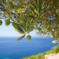 Az olívaolaj jótékony hatása a bőrre