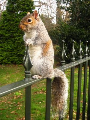 Utazás Greenwich-be, állatok a parkban