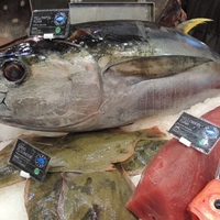 Tonhal az óceánok szürke marhái