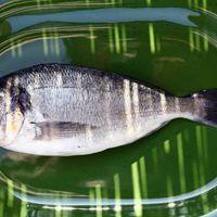 A halak frissesség vizsgálata, hogy a halkereskedő ne tudjon átverni.