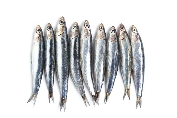 sardinefishes.jpg