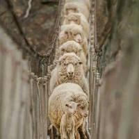 a tökéletes ajándék: a bárány maga