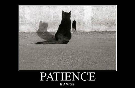 patience-cat-waiting.jpg