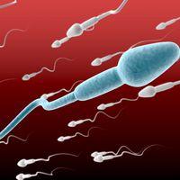 Hová tűntek a felhasználható donor-spermiumok hazánkból?