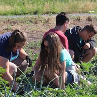 Nyári diákmunka a mezőgazdaságban ....