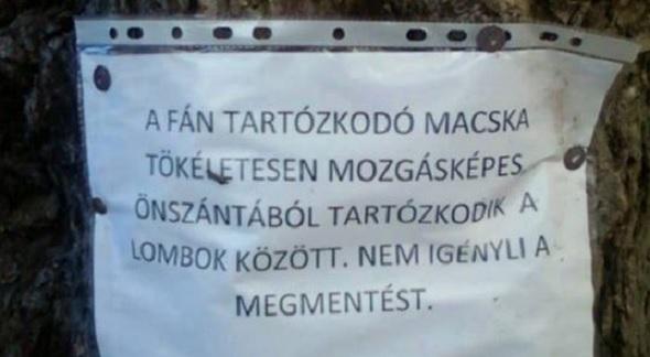 a_fan_tartozkodo_macska.jpg