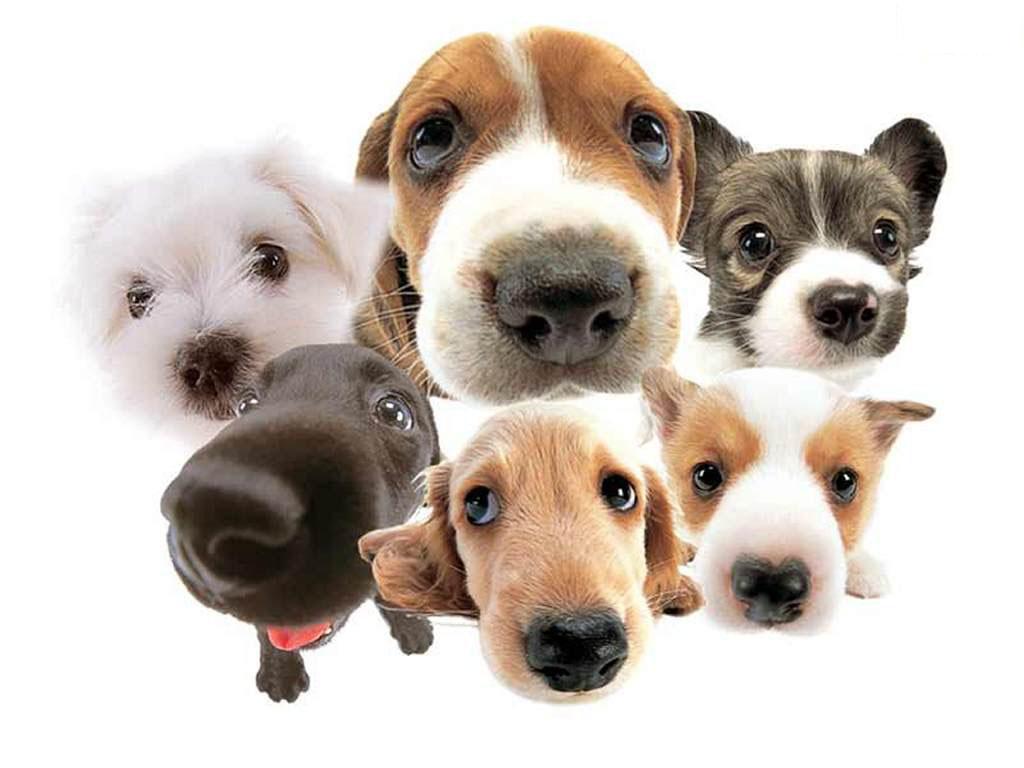 dogs61.jpg