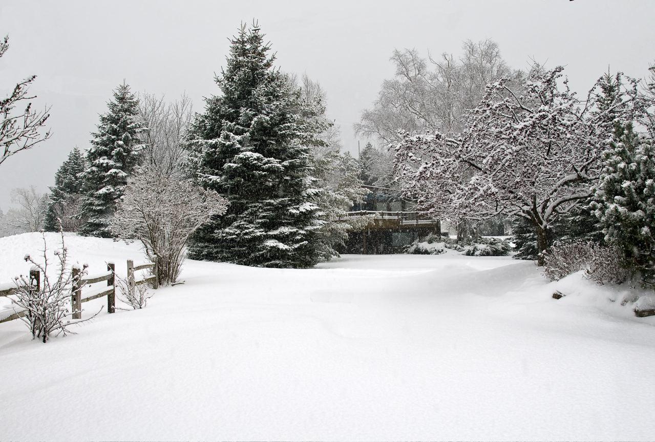 week-49-christmas-eve-snow-in-blue-heaven.jpg