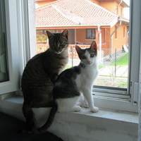 Lola és Ábel - Születtek március 31-én