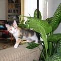 Ábel a rengetegben  -  vagy  -  Lola a dzsungelharcos
