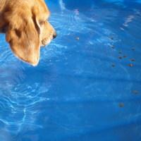 Jutifalik a medencében