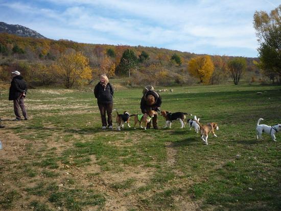 40_meg_beagle.jpg