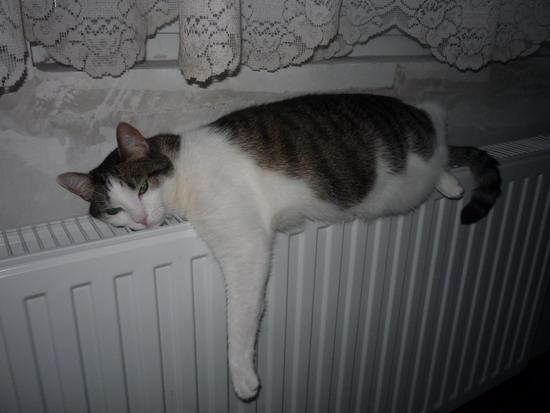 01_vilmos_radiator.jpg