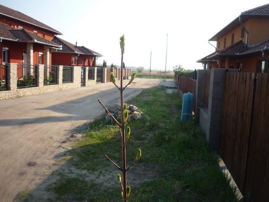 46_utcai_facska.jpg