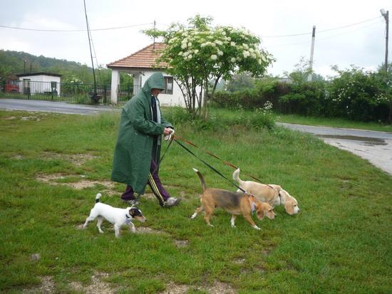 07_seta_az_esoben_erzsi-kutyakkal.jpg