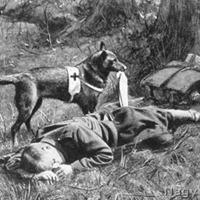 Kutyák alkalmazása az első világháborúban – 2/2. rész