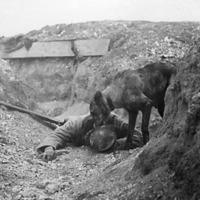 Kutyák alkalmazása az első világháborúban – 2/1. rész