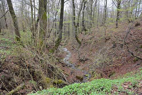 A Weretyszow felől induló egyik erdős vízmosás