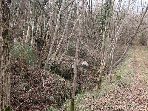A 4-es honvéd emlékmű felé vezető erdei út. A kép bal oldalán az egykori Biene 2 balszárnyának maradványa