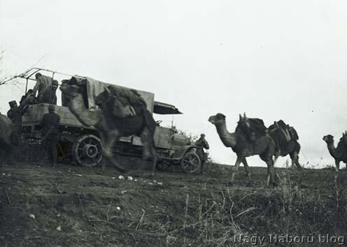 Tevekaraván találkozása osztrák–magyar katonai gépkocsival a Dardanelláknál.