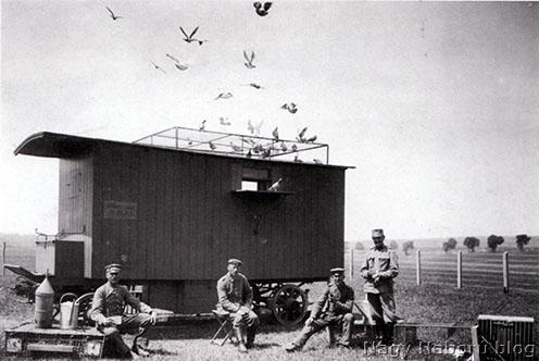 Postagalambcsapat visszatérése az állomásra. Orosz front, 1916
