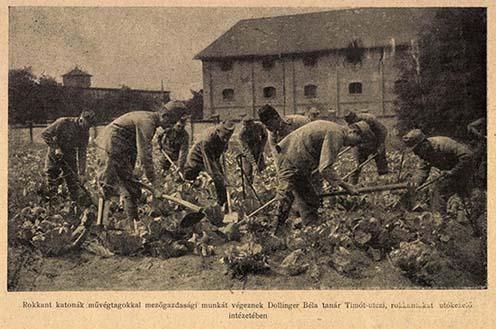 Rokkant katonák művégtagokkal mezőgazdasági munkát végeznek a Timót utcai utókezelő intézetben