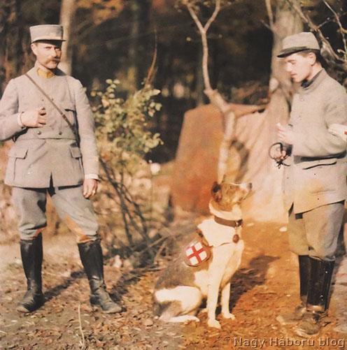 Egészségügyi kutya a francia hadseregben
